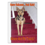 Halloween Dog and No Treats Cards