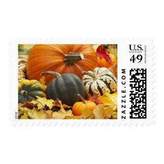 Halloween Fall Season Wedding Theme Decor Postage