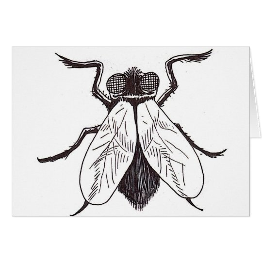 Halloween Fly Art Card