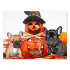 Halloween French Bulldogs Photo Print