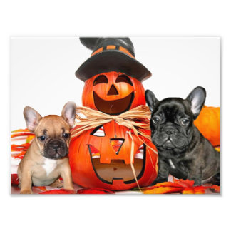 Halloween French Bulldogs Photo Print