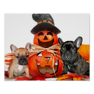 Halloween French Bulldogs Poster