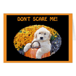 Halloween Funny Puppy Witch T-Shirts & Gift Items Card