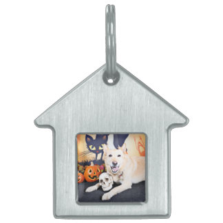 Halloween - Golden Labrador - Lola Pet Name Tag