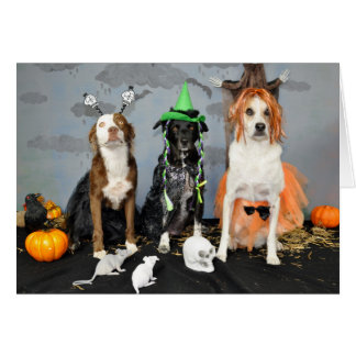 Halloween greeting card. Photo, 3 dogs in drag. Card