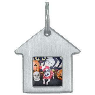 Halloween - Italian Greyhound - Waldo Pet Tag