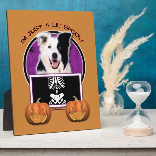 Halloween - Just a Lil Spooky - Border Collie Plaques