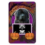 Halloween - Just a Lil Spooky - Newfoundland Rectangle Magnets
