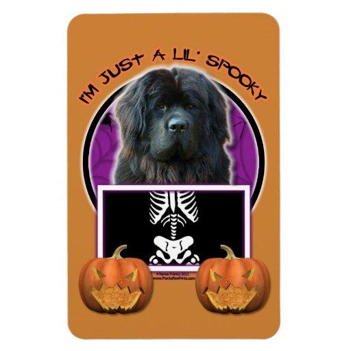 Halloween - Just a Lil Spooky - Newfoundland Vinyl Magnet