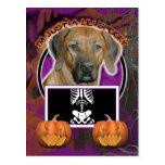 Halloween - Just a Lil Spooky  Rhodesian Ridgeback Postcard