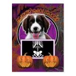 Halloween - Just a Lil Spooky - Springer Spaniel Postcard