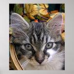 Halloween Kitten, Baby Kitty Cat, Holiday Season Poster