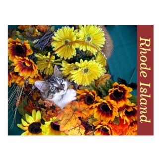 Halloween Kitty Cat Kitten, Thanksgiving Holiday Postcard