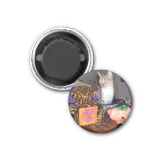 Halloween Kitty Fridge Magnets