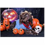 Halloween - LabraDoodle - máximos Escultura Fotográfica