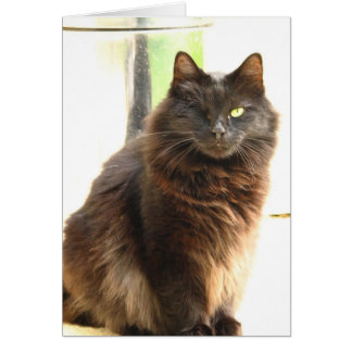 Halloween-One Eyed Black Cat Greeting Card