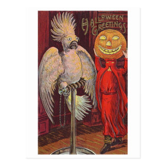 Halloween Parrot and Pumpkin Postcard