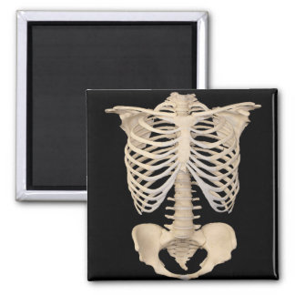 Halloween Party Scary Zombie Cage Skeleton Magnet