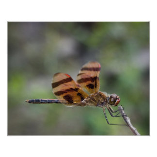 Halloween Pennant Dragonfly on twig Poster