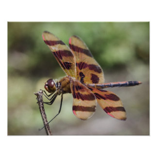 Halloween Pennant Dragonfly poster