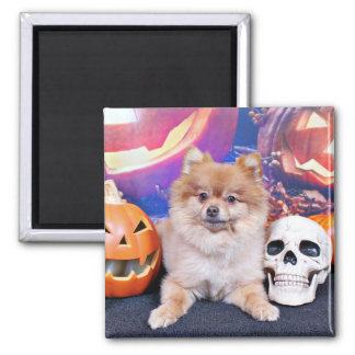 Halloween - Pomeranian - Simba Imán De Frigorífico