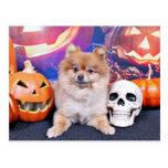 Halloween - Pomeranian - Simba Postcard