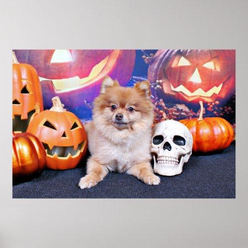 Halloween - Pomeranian - Simba Poster