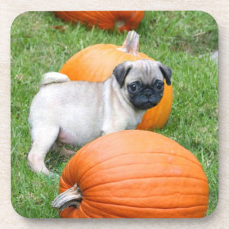 Halloween Pug Dog  coasters set of 6
