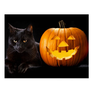 Halloween pumpkin and black cat postcard
