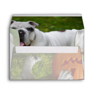 Halloween pumpkin bulldog envelope