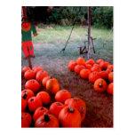 Halloween Pumpkin Patch Post Card