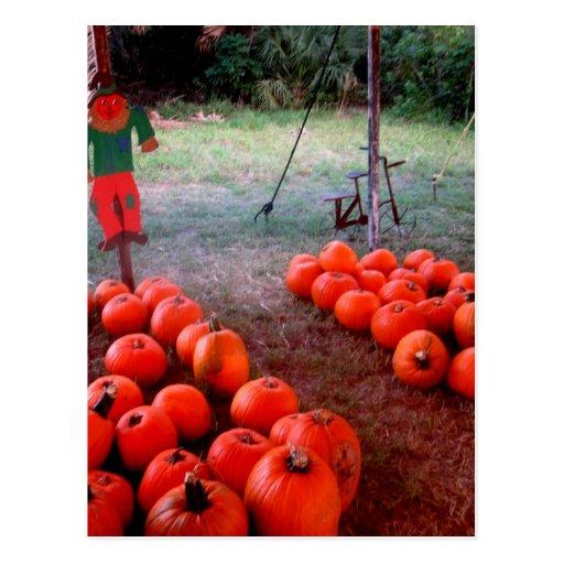 Halloween Pumpkin Patch Postcard