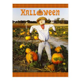 Halloween scarecrow in pumpkin field postcard