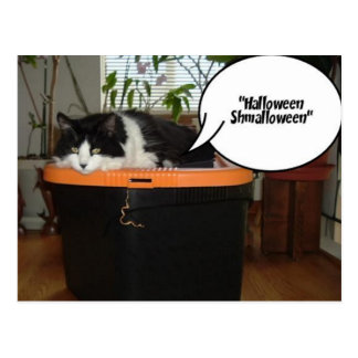 Halloween Shmalloween Post Cards