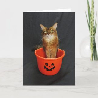 Halloween Somali Cat With Trick or Treat Bucket Holiday Card