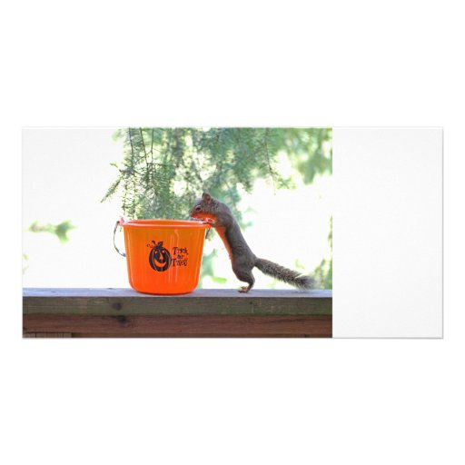 Halloween Squirrel Photo Greeting Card