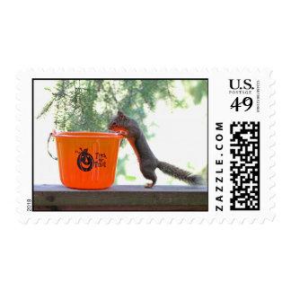 Halloween Squirrel Postage Stamps