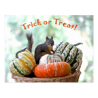 Halloween Squirrel Postcard