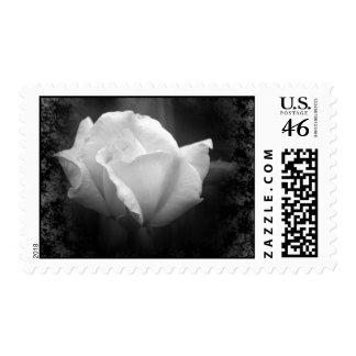 Halloween Wedding-White Rose Postage