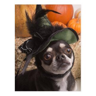 Halloween Witch Dog Postcard