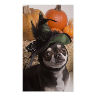 Halloween Witch Dog Posters