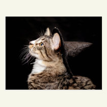Halloween Witch Hat Cat Postcard