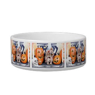 Halloween - Yorkie - Roxy Pet Food Bowls