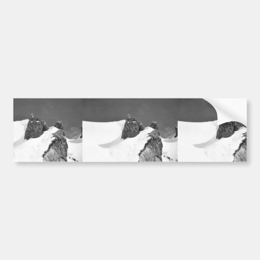 Halter Collection Bumper Stickers