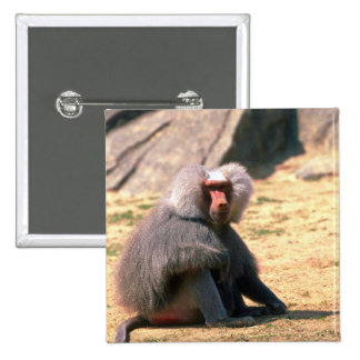 Hamadryas Baboon-adult male sitting Pinback Button