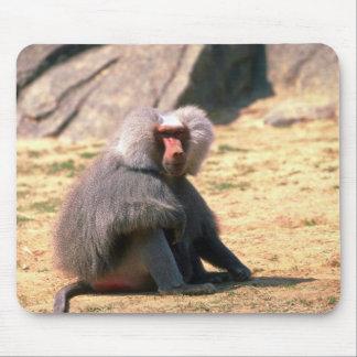 Hamadryas Baboon-adult male sitting Mouse Pad