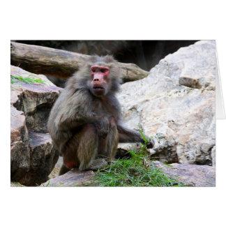 Hamadryas Baboon Card