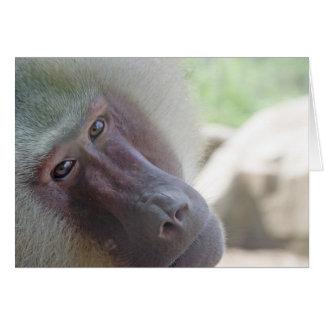 Hamadryas baboon cards