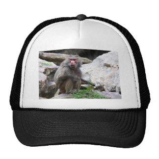 Hamadryas Baboon Trucker Hat