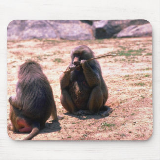 Hamadryas Baboons gnawing bark from stick Mousepads